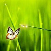 butterfly-on-leaves-in-sun